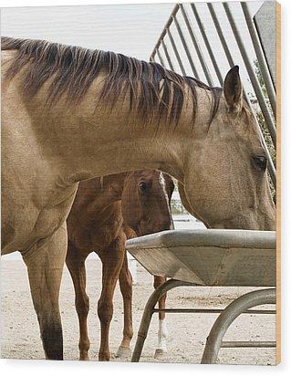 Wood Print featuring the photograph Peeking Pony by Lorraine Devon Wilke