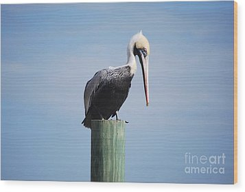 Pelican 1 Wood Print by Gordon Mooneyhan