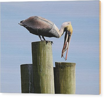 Pelican Fishing Wood Print by Paulette Thomas