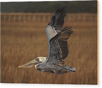 Pelican Flying Through The Marsh Wood Print by Paulette Thomas