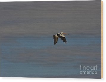 Wood Print featuring the photograph Pelican In Flight 4 by Blair Stuart