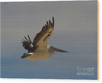 Wood Print featuring the photograph Pelican In Flight 5 by Blair Stuart