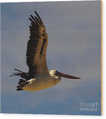 Wood Print featuring the photograph Pelican In Flight by Blair Stuart
