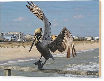 Pelican Landing On The Pier Wood Print by Paulette Thomas