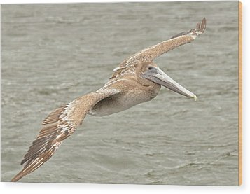 Pelican On The Water Wood Print by Rick Frost