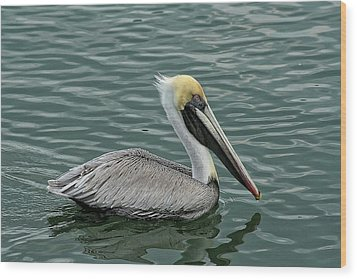 Pelican Out For A Swim Wood Print by Sandra Anderson