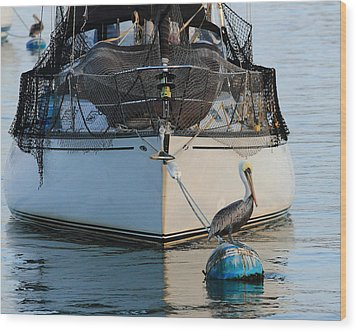 Wood Print featuring the photograph Pelican Pose  by Coby Cooper