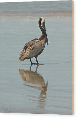 Pelican Reflections Wood Print by Cindy Haggerty
