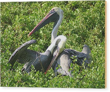 Wood Print featuring the photograph Pelican Romance by Laurel Talabere