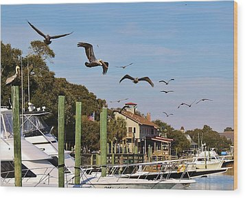 Pelicans Abound Wood Print by Paulette Thomas