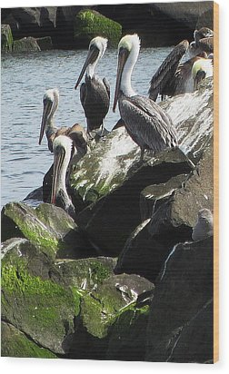 Pelicans At Hammond Wood Print by Steven A Bash