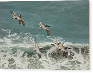 Pelicans In Flight Over Surf Wood Print by Gregory Scott
