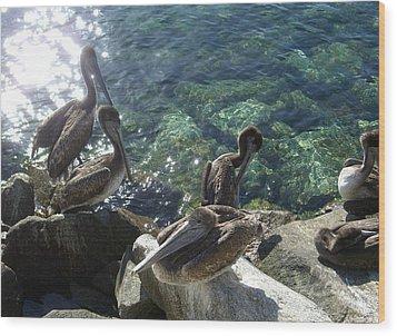 Pelicans Wood Print