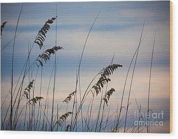 Pensacola Beach Sea Oats Wood Print by Steven Gray