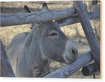 Wood Print featuring the photograph Pensive Donkey by Michael Dohnalek