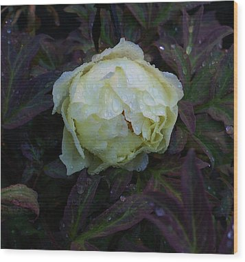 Wood Print featuring the photograph Peony After The Rain by Jerry Cahill