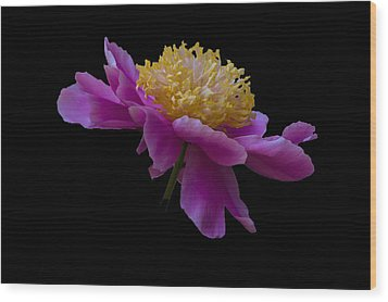 Peony Number One Wood Print