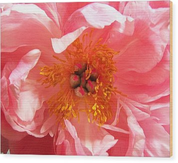 Wood Print featuring the photograph Peony by Peter Mooyman