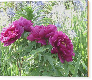 Peony Wood Print by Rebecca Overton