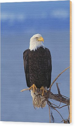 Perched Bald Eagle Wood Print by Natural Selection David Ponton