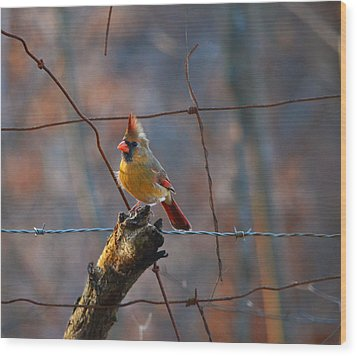 Wood Print featuring the photograph Perched Cardinal by Brian Stevens