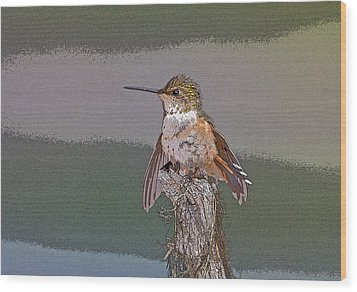 Perched Hummingbird- Abstract Wood Print by Tim Grams