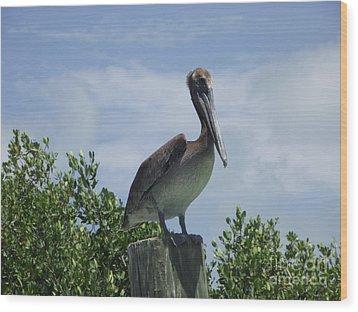 Perched Pelican Wood Print