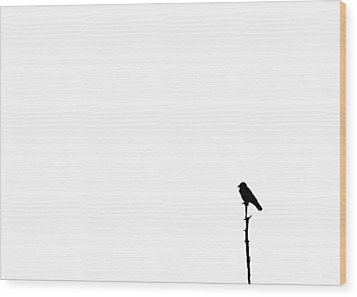 Perched Wood Print by Tom McCarthy