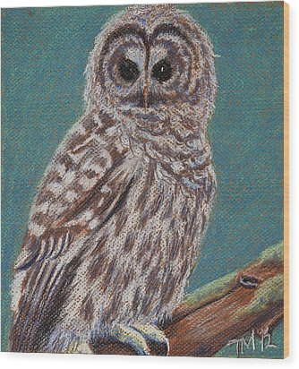 Perching Spotted Owl Wood Print by Thomas Maynard