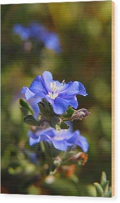 Perennial Blue Flower Wood Print