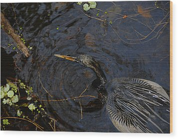 Perfect Catch Wood Print by David Lee Thompson