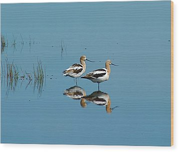 Perfect Reflection Wood Print by Kathy Gibbons