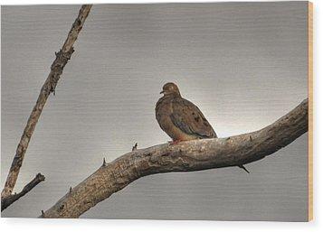 Perked Wood Print by Barry R Jones Jr