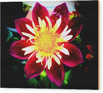 Wood Print featuring the photograph Personally Dahlia by Lisa Brandel
