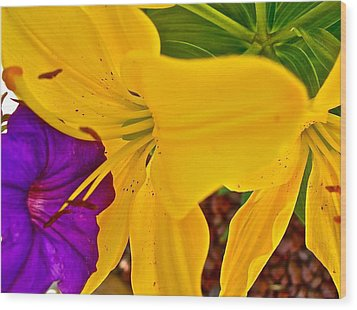 Pet Lily Wood Print by Randy Rosenberger