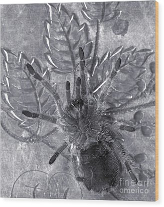Pet Rose Hair Tarantula On Antique Silverplate Wood Print by Janeen Wassink Searles