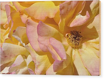 Petal Profusion Wood Print by Sandy Fisher