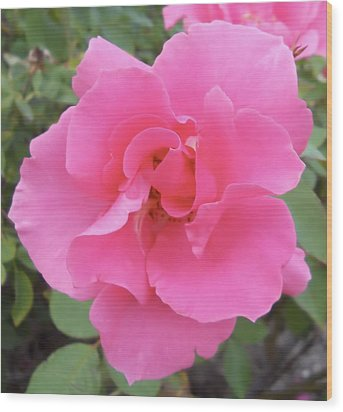 Wood Print featuring the photograph Petals Of Pink by Lynnette Johns