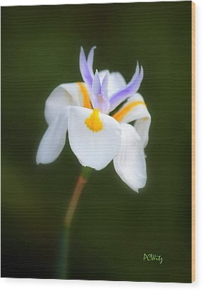 Petite Flower Wood Print by Patrick Witz