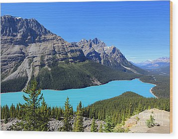 Peyto Lake Alberta Canada Wood Print
