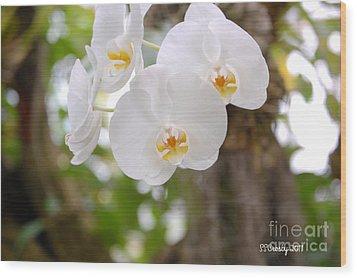 Phalaenopsis Aphrodite Moon Orchid Wood Print