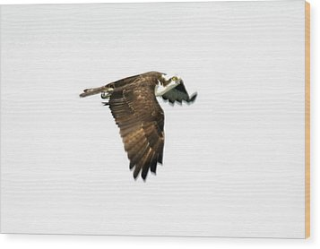 Phantom Of The Osprey Wood Print