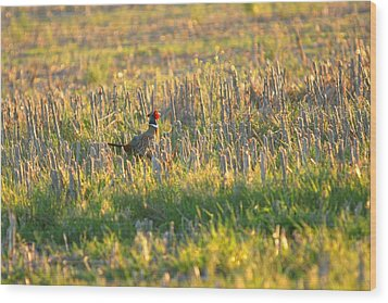 Wood Print featuring the photograph Pheasant Into The Light by Shirley Heier