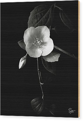 Philadelphus In Black And White Wood Print