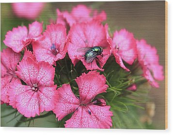 Phlox And Fly Wood Print by Scott Hovind