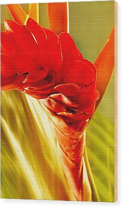 Photograph Of A Red Ginger Flower Wood Print