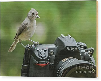 Photographer's Little Helper Wood Print