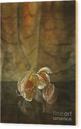 Physalis Wood Print by Johnny Hildingsson