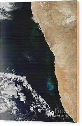 Phytoplankton Bloom Off Nambia Wood Print by Nasa