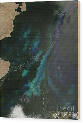 Phytoplankton Off Argentinas Coast Wood Print by Nasa